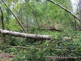 Наслідки буревію в Поліському лісництві (Прип'ятська сільська рада)