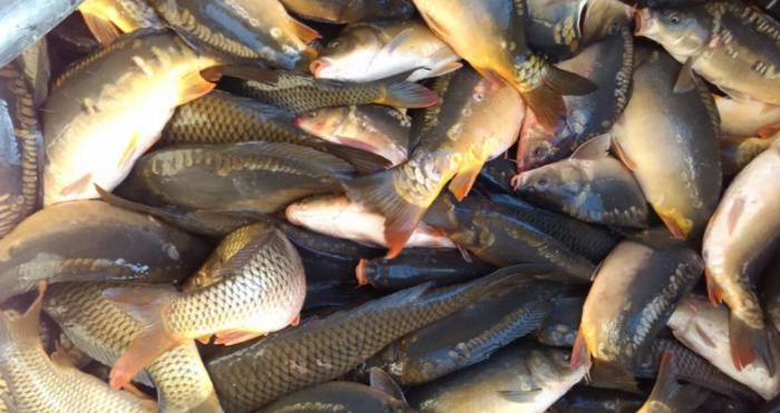 У Шацькій громаді виявили незаконну торгівлю рибою