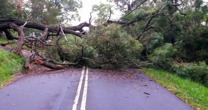 На Шаччині повалили дерева