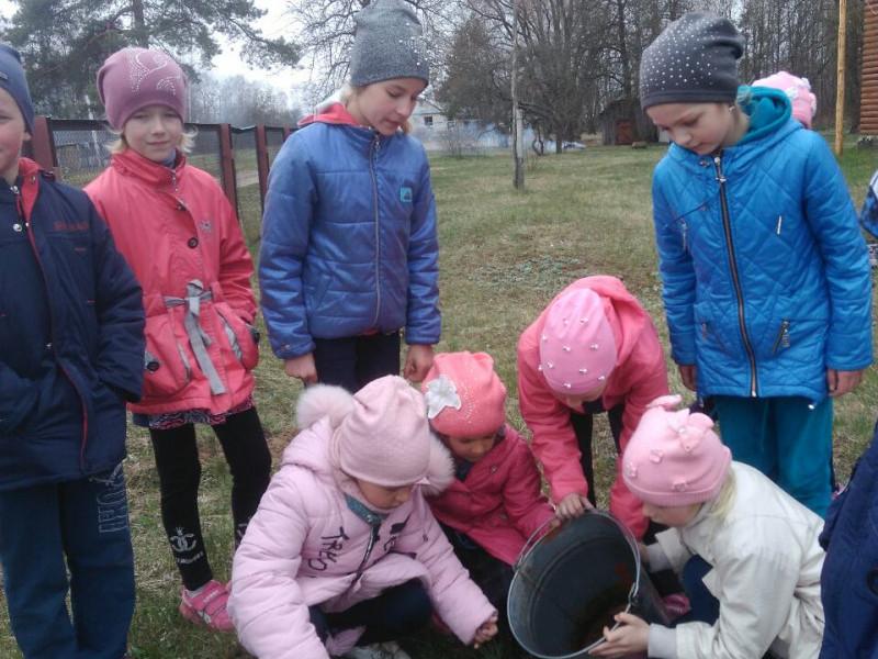 Школярі посадили сосни і ялини