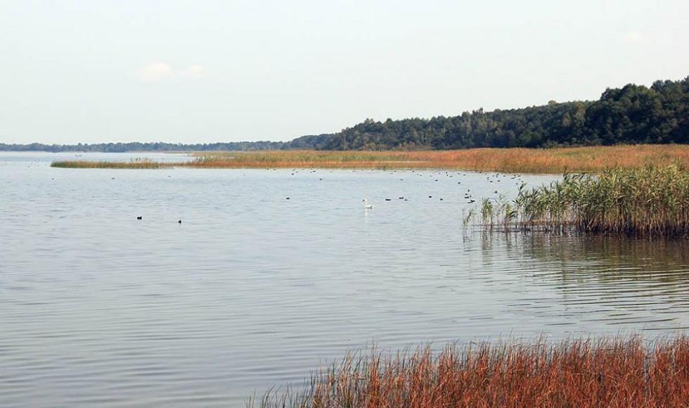 Птаство на озері Пулемецьке