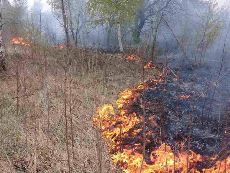 Пожежа сухої трави
