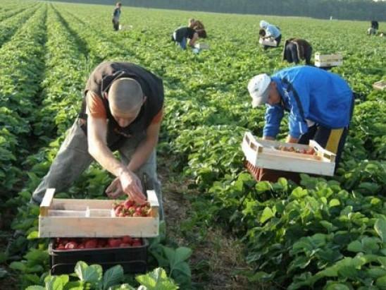 Назвали умови, за якими українці зможуть виїхати за кордон на заробітки