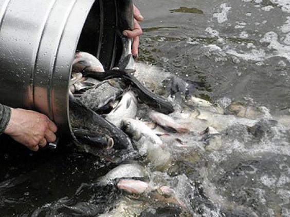 Прокуратура вимагає від рибогосподарників звільнити земельну ділянку біля Піщі вартістю 153 мільйона