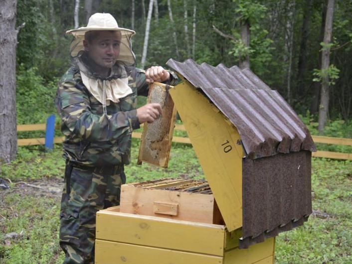 На пасіці Шацького нацпарку викачали перший мед