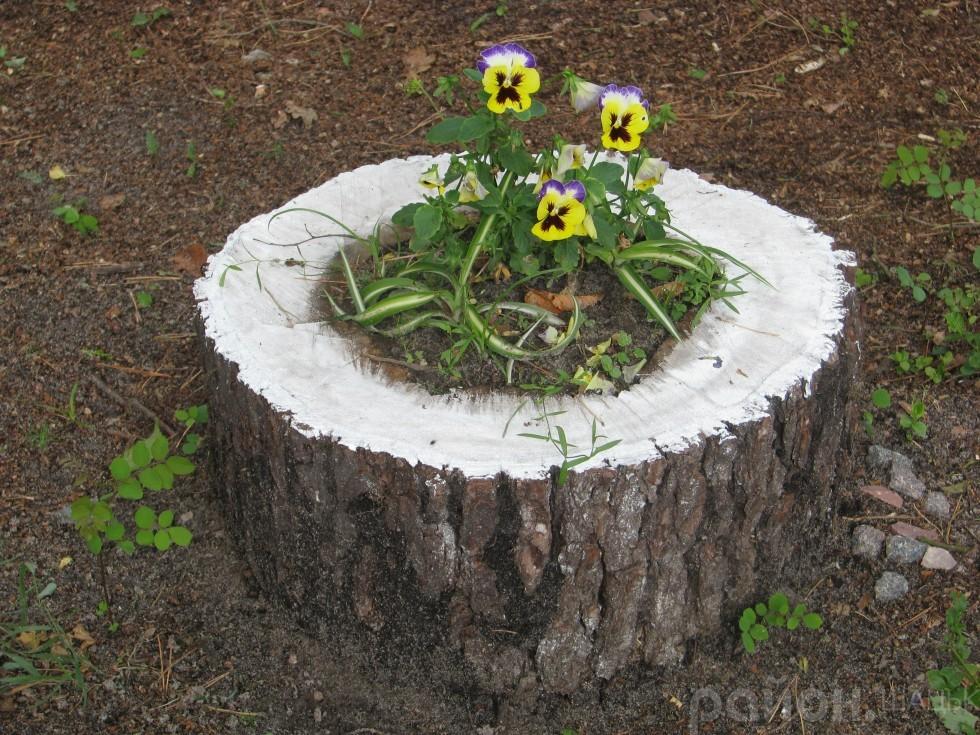 Креатив від лісівників