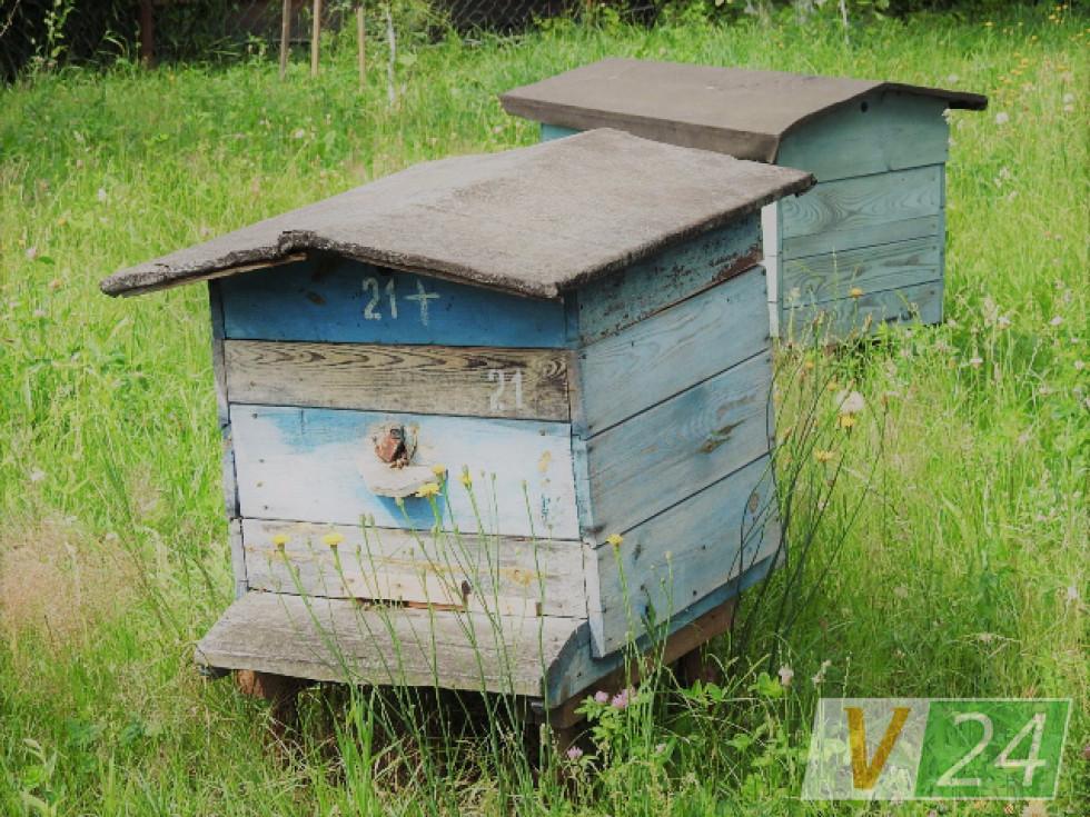 ...І бджоли
