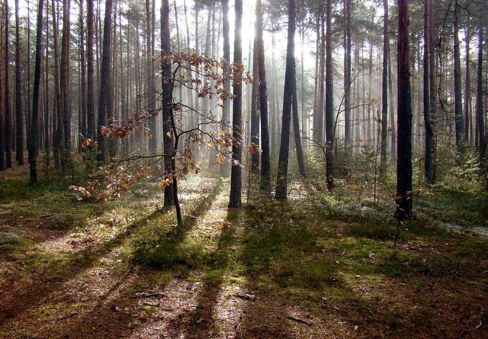Осінній ліс недалеко біля озера Світязь