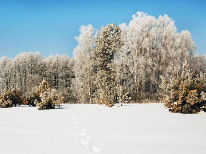 Фото зимового пейзажу від Ігоря Цвида