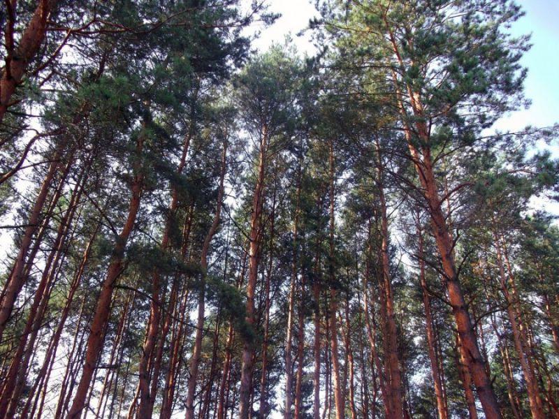 Ліс будуть оподатковувати