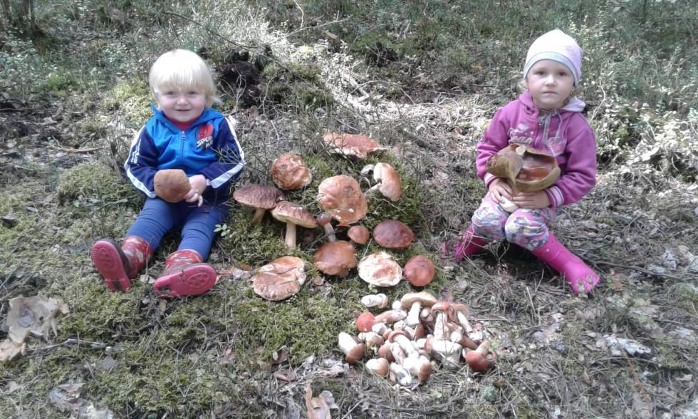Діточки і грибочки - багатство Олени Богути