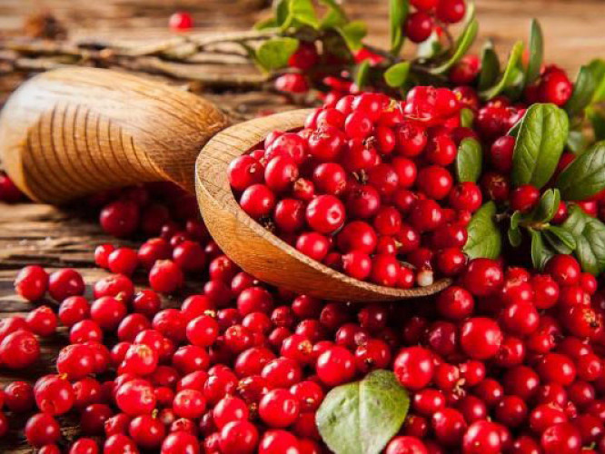 Журавлина - смачна, красива і надзвичайно корисна ягода.