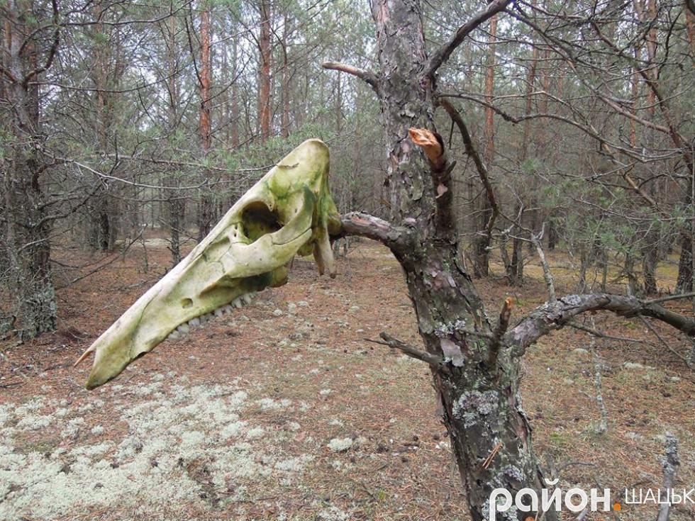 Схожий на лісового монстра