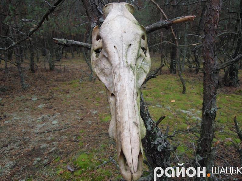 Страхітлива лісова знахідка
