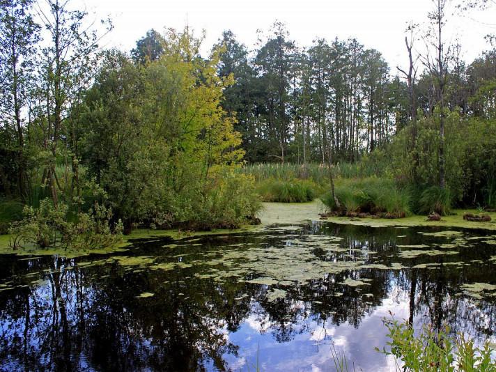 Байдаркова подорож - «Поліські джунглі»
