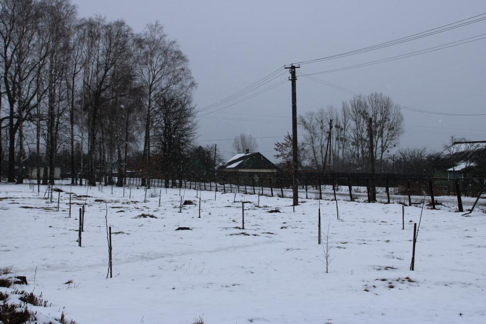 Молодий сад біля школи